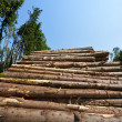 Stock Photo: Logging