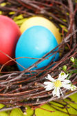 Easter eggs in a nest — Stok fotoğraf