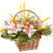 Beautiful flowers in a basket - Stock Photo