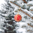 Christmas ball on the fir — Stock Photo
