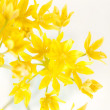 Yellow flowers in the vase — Stock Photo #6972745