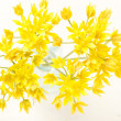 Yellow flowers in the vase — Stock Photo