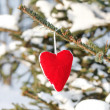 Heart on the branch of fir — Stock Photo #6977915