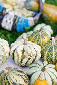 Colorful pumpkins collection — Foto Stock