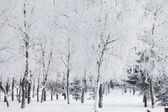 Winter park in snow — Стоковое фото