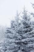 Parque de invierno en la nieve — Foto de Stock