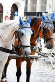 Fiaker-pferde — Stockfoto