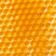 Fresh honey in comb — Stock Photo #6981319