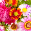 Flowers — Stock Photo #6982278