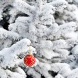 boule de Noël sur le sapin — Photo