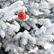 Christmas ball on the fir — Foto Stock