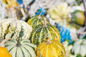 Colorful pumpkins collection — ストック写真