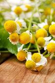 Chamomiles and mint — Stock Photo