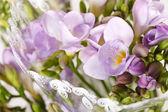 Purple freesia — Stock Photo