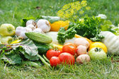 Fresh vfresh vegetables — Stock Photo