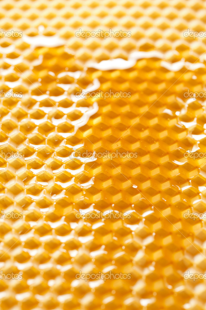 Fresh honey in comb   Stock Photo #6982021