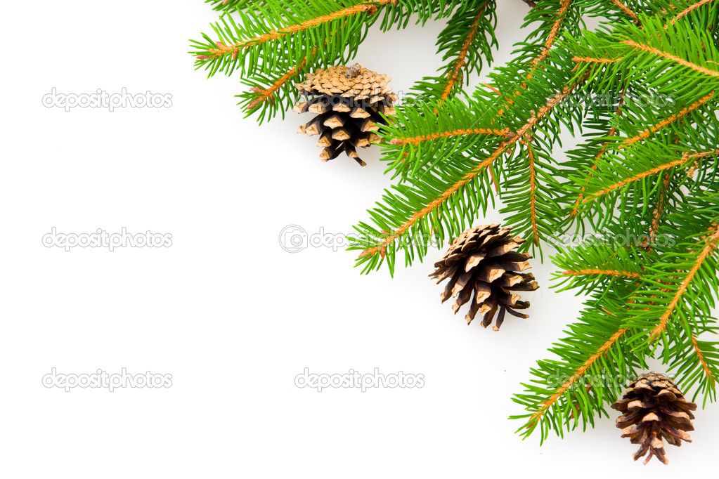 Closeup of a barren Christmas tree branches isolated on white background.  Stock Photo #6881075