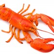 Stock Photo: Lobster