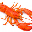Lobster — Stock Photo #7621548