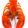 Lobster — Stock Photo #7652586