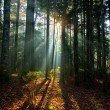Sun Shining Through Tree in Forest — Stok fotoğraf