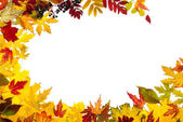 Autumn leaves are different — Stock Photo