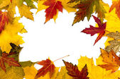 The frame of autumn leaves — Stock Photo