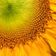 Close up shot of Sun flower seeds background — Stock Photo