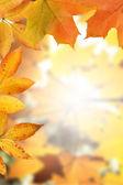 Golden Autumn Frame — Stock Photo