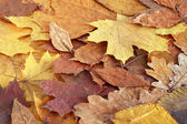Dry Leaves Background — Stock Photo