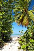 Path to caribbean sea — Stock Photo