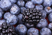 Whortleberries and blackberry — Stock Photo