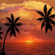 Palm trees silhouette at sunset — Stock Photo