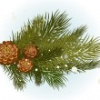 Pine branch with cone — Stockvectorbeeld