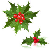 Christmas Flower holly berry — Stock Vector