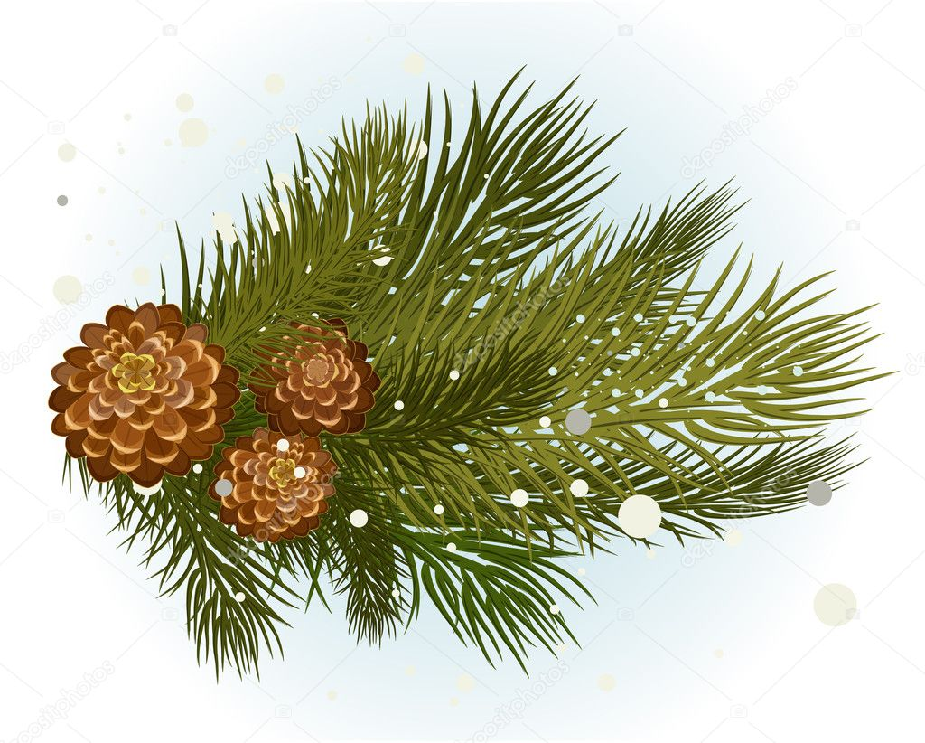 Pine branch with cone — Stock Vector #7921314