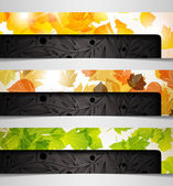 Banner hybrid autumn leaf combination abstract background — Stock Vector