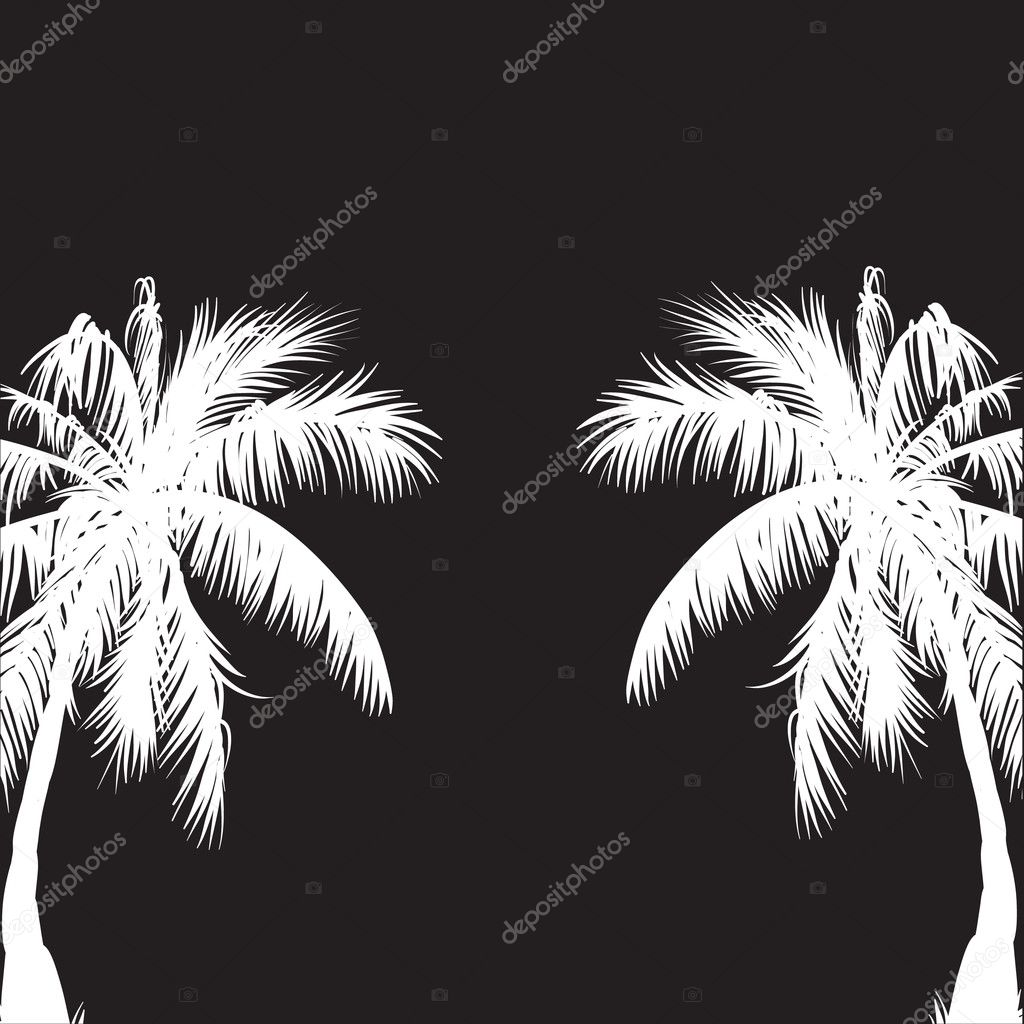 Palm Trees Background Black And White Two White Palm Trees on a