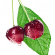 Pair of red wet cherry fruit on stem with green leaf isolated on — ストック写真