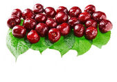 Many red wet cherry fruits (berries) on green leaves, isolated w — Stock Photo