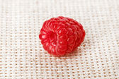 One red ripe raspberry fruit, on gray linen table cloth, macro — Stock Photo