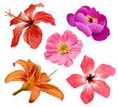 Conjunto de vectores de flores — Vector de stock