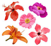 Flowers vector set — 图库矢量图片