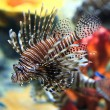 Tropical sea fish in aquarium — Stock Photo