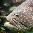 A large fish — Stock Photo