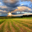 Oblique field of wheat on a sunset — Stock Photo