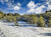 Día solar de invierno en madera, bielorrusia — Foto de Stock