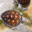 Sea turtles in nursery, Thailand - Stock Photo