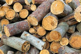 The sawn trunks of a pine — Stock Photo