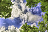 Kind on clouds through tops of trees — Stock Photo